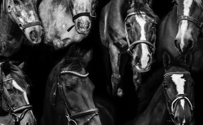 Alle heste sh