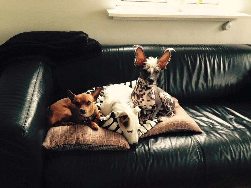 Tre søde hunde